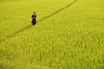 Phonsavan Vasos Laos Bombies rice fields